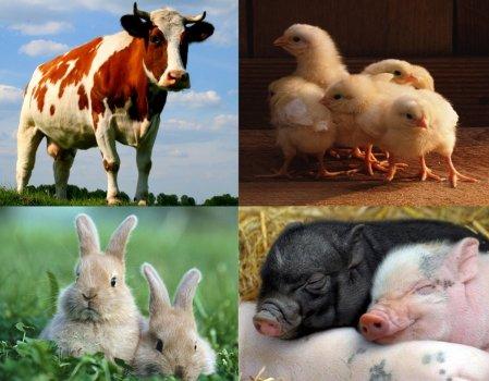 Дигидрокверцетин — сырье для животноводства и сельского хозяйства